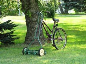 Der perfekte Rasen - Hier unsere 7 Tipps
